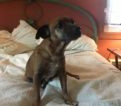 Buddy – NY Second Chance Rescue