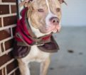 Lucas – 1 year old – NY Second Chance Rescue