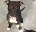 Molly – 1 year old – NYC Second Chance Rescue
