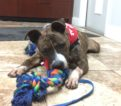 Cassidy – 1 year old – NYC Second Chance Rescue