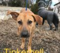 Tinkerbell – Call/text Lisa (914) 469 – 6605