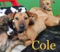 Cole – Call/text Lisa (914) 469 – 6605