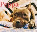 Peppa – Call/text Lisa (914) 469 – 6605